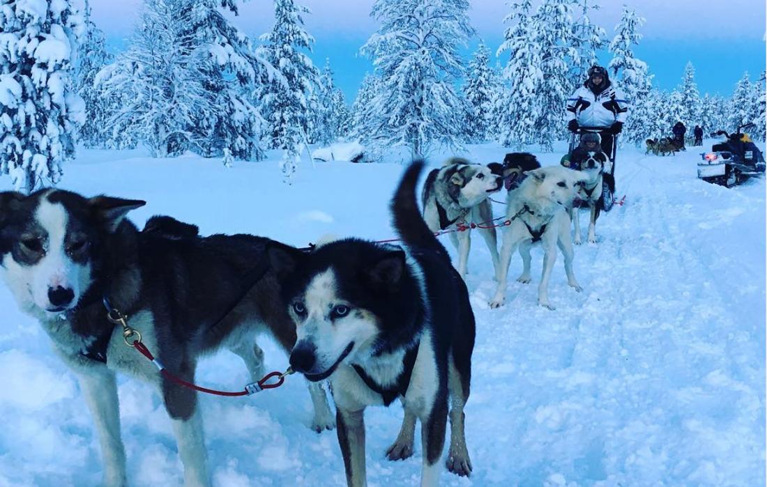 Cani husky in primo piano e slitta sullo sfondo