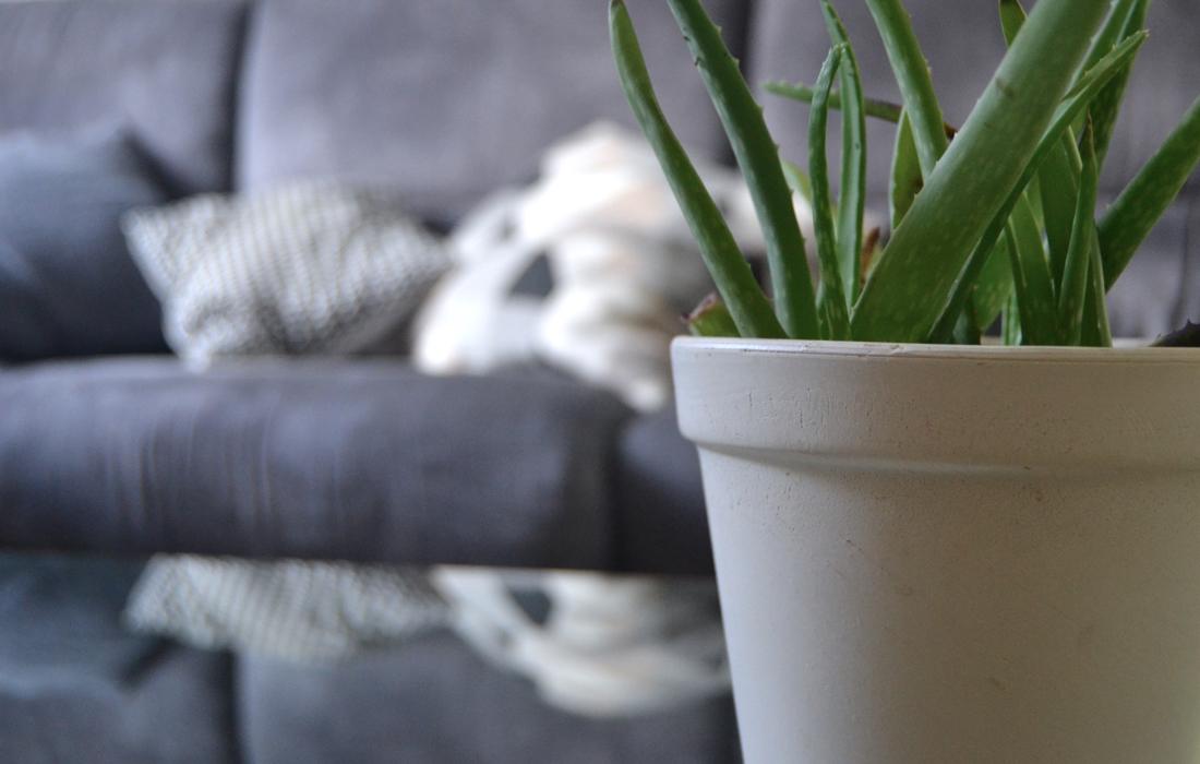 Un vaso in ceramica bianca con pianta verde in primo piano. Sullo sfondo un divano grigio e due cuscini con stampe geometriche